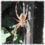 elogind Bug Fix Wednesday: glibc, meson, dbus